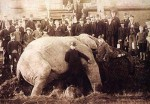 Jumbo's tragic death - his circus family surrounds him in mourning.