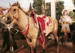 The mounted Buttermilk in the exhibit that housed him, Bullet, and Trigger for many years.